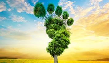 Karbon Ayak İzi ve Sürdürülebilirlik