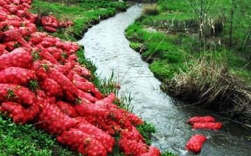Biyogaz Tesisi ile Soğanlar Elektriğe Dönüşecek