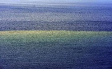 Bodrum'da Denizin Rengi Kahverengi Oldu