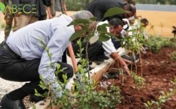 Etiyopya: Bir Günde 353 Milyon Fidan Dikilerek Dünya Rekoru Kırıldı