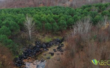 Şile'de Doğa Katliamı: Ormanlık Alan Lastik Tarlasına Döndü