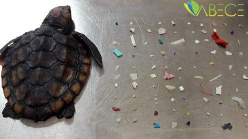 Deniz Kaplumbağasının Midesinden 104 Parça Plastik
